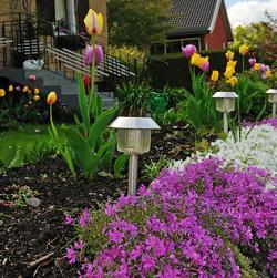 Solar-Powered Garden Lights
